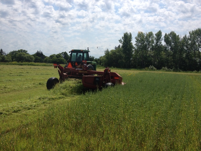 Matt Cutting Hay with the Discbine