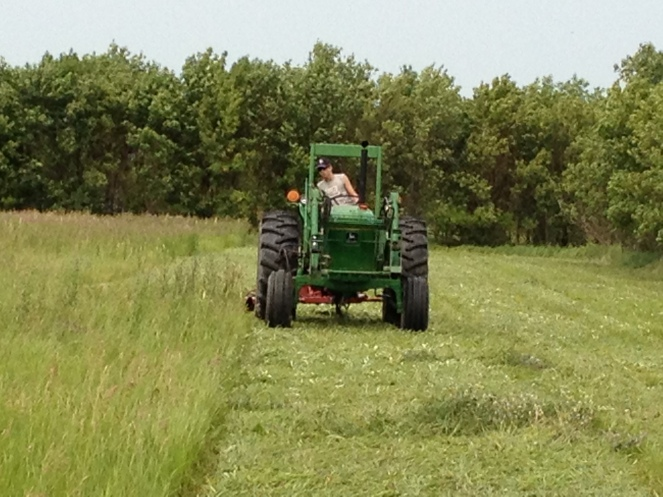 Matt Cutting Hay with the Sickle Mower